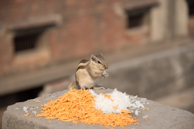 My dad photographed this gorgeous little critter - so so so cute - I love the wildlife in India :D
